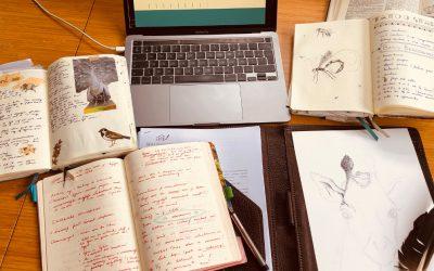 Auteursrechten een voorrecht voor auteurs?